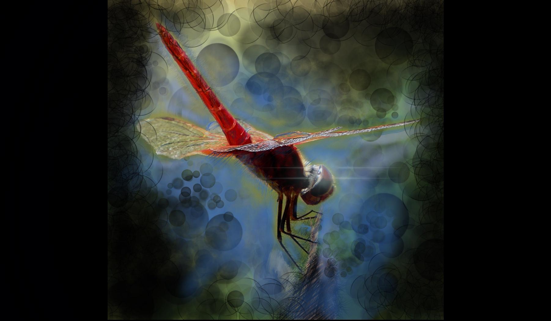 Dragonflies under Moonlight